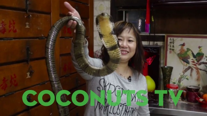 Freaky Feasts: Snake Soup